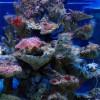 Aquarium and Marine Museum
