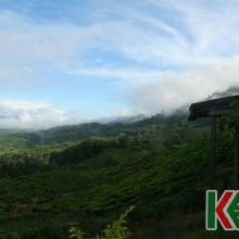 2 DAYS 1 NIGHT KINABALU PARK , MESILAU & SABAH TEA FARM